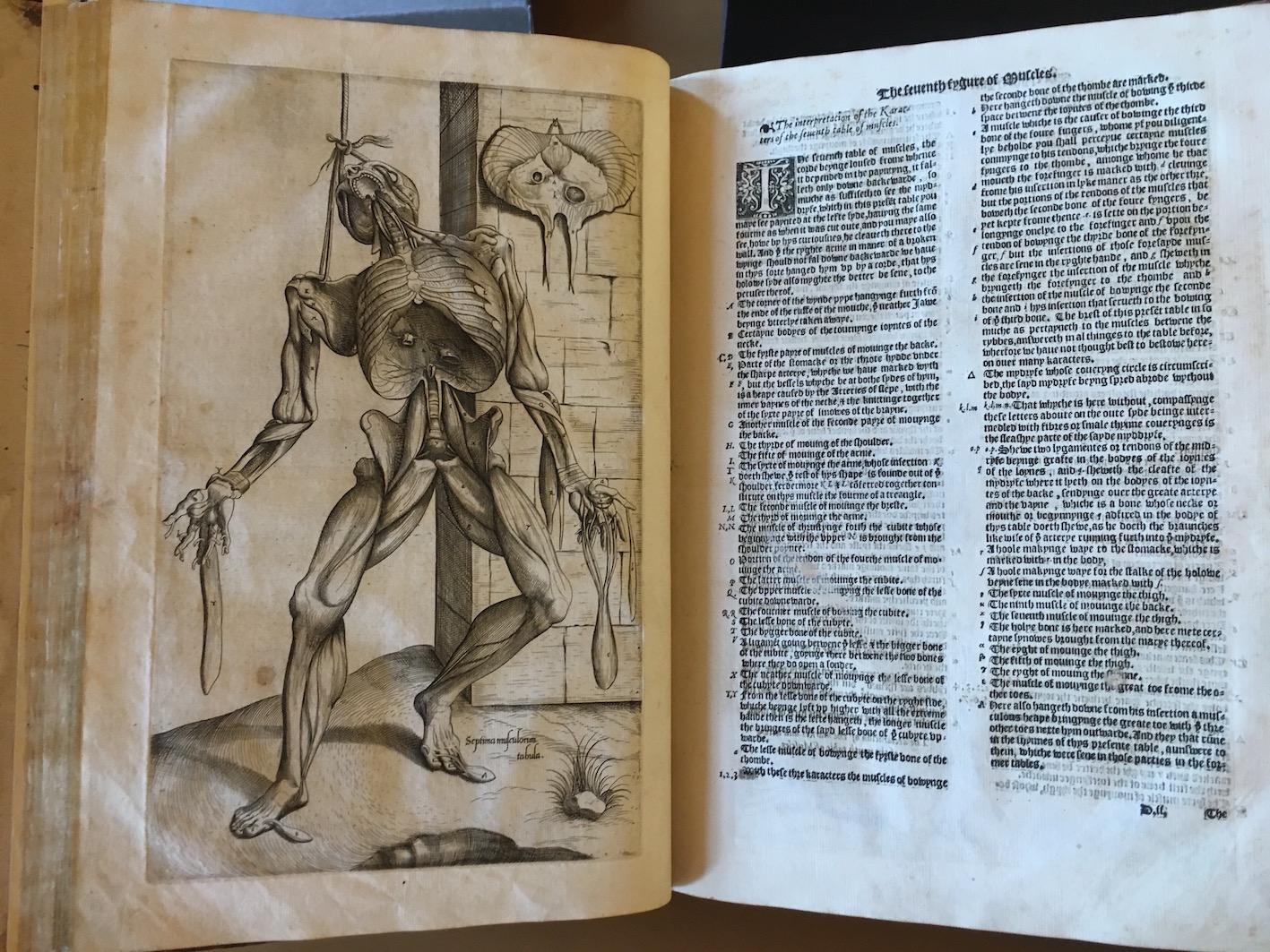 T. Geminus, <i>Compendiosa totius anatomie delineatio</i> (London 1553).