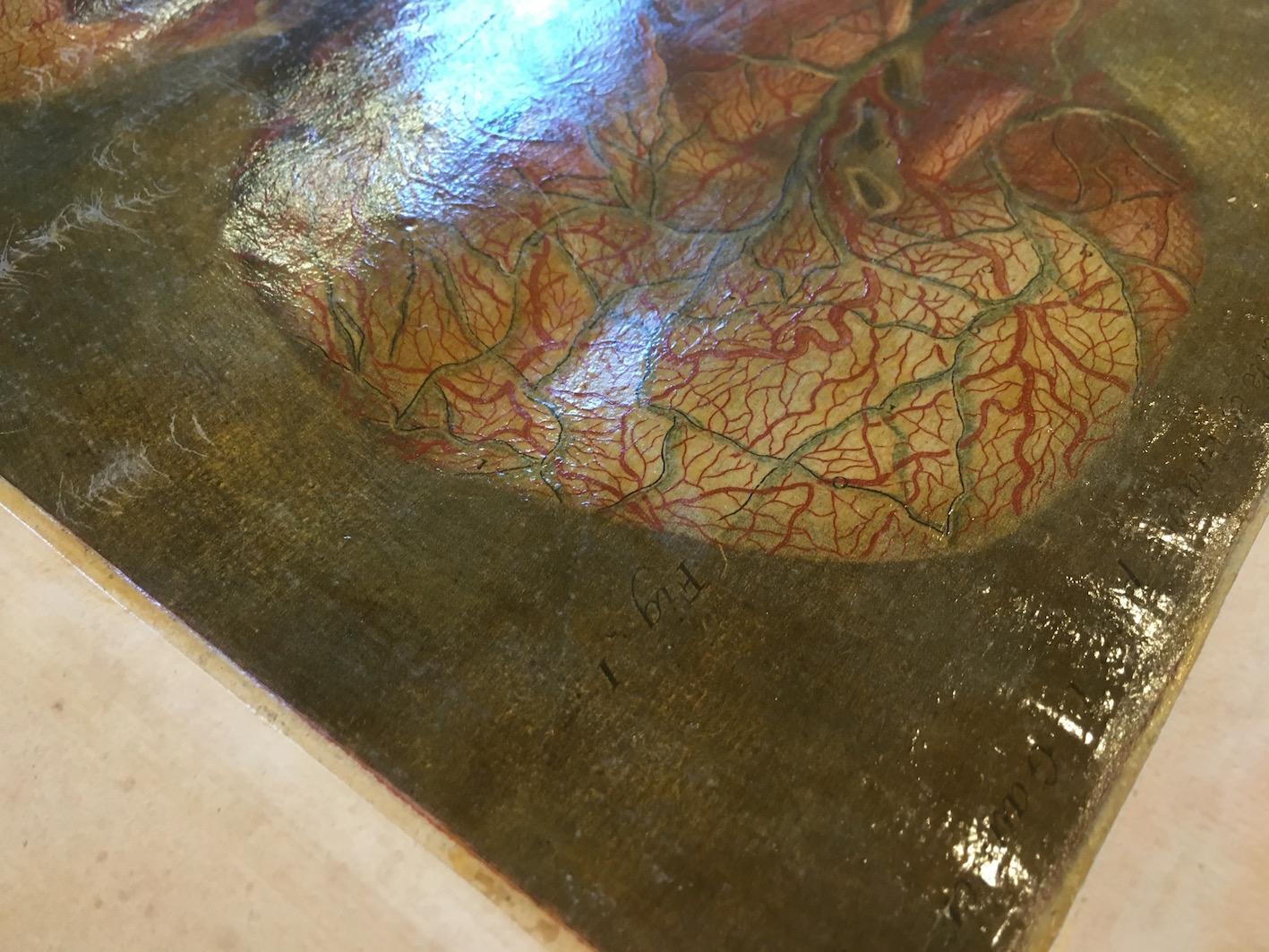 plate from G. Dagoty, <i>Anatomie de la tête: en tableaux imprimés</i> (Paris, 1978), detail.