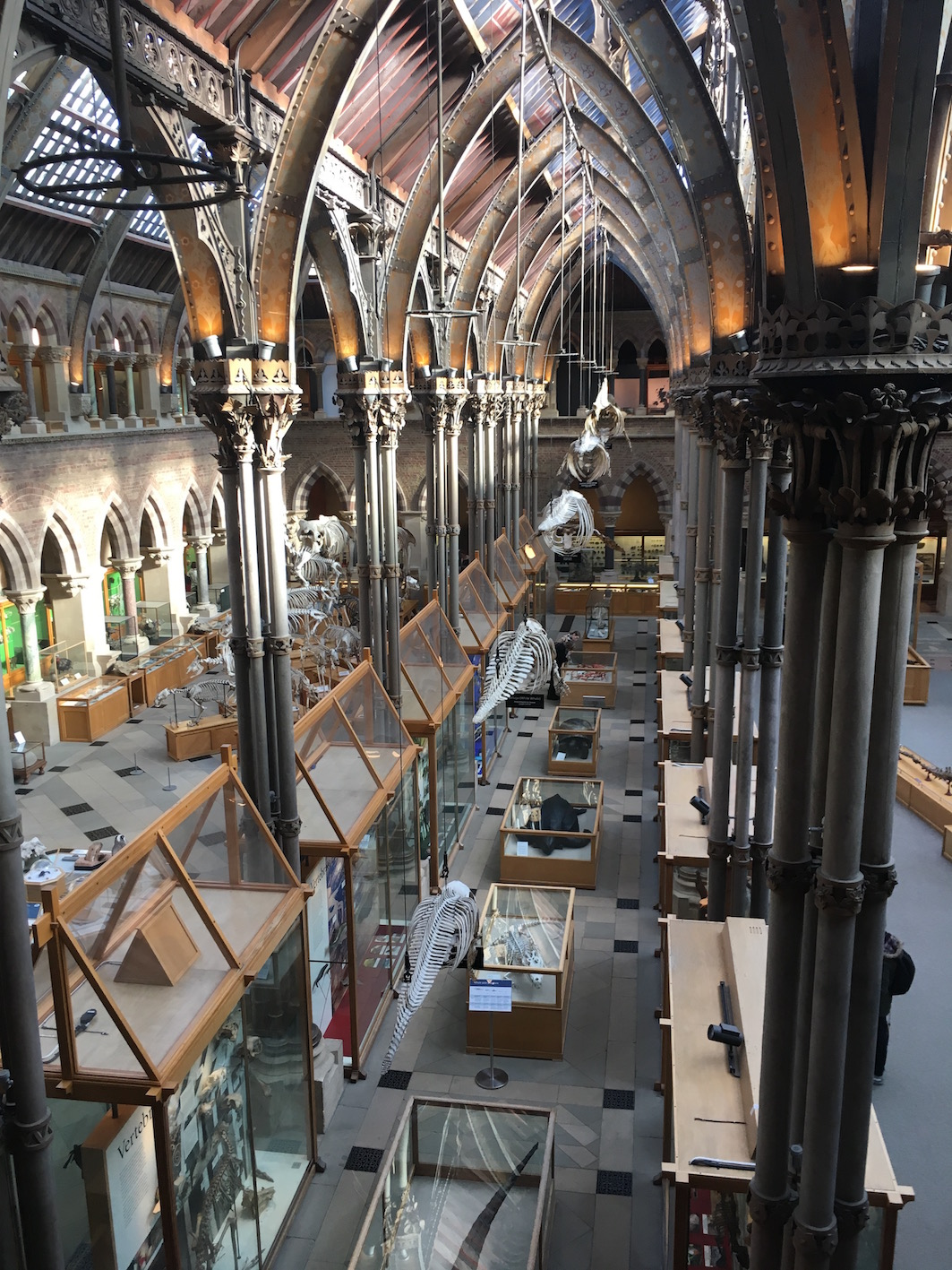 General view of the Oxford University Museum of Natural History.