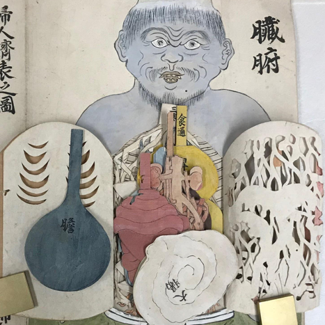 An Edo- Period Flap Anatomy Manuscript