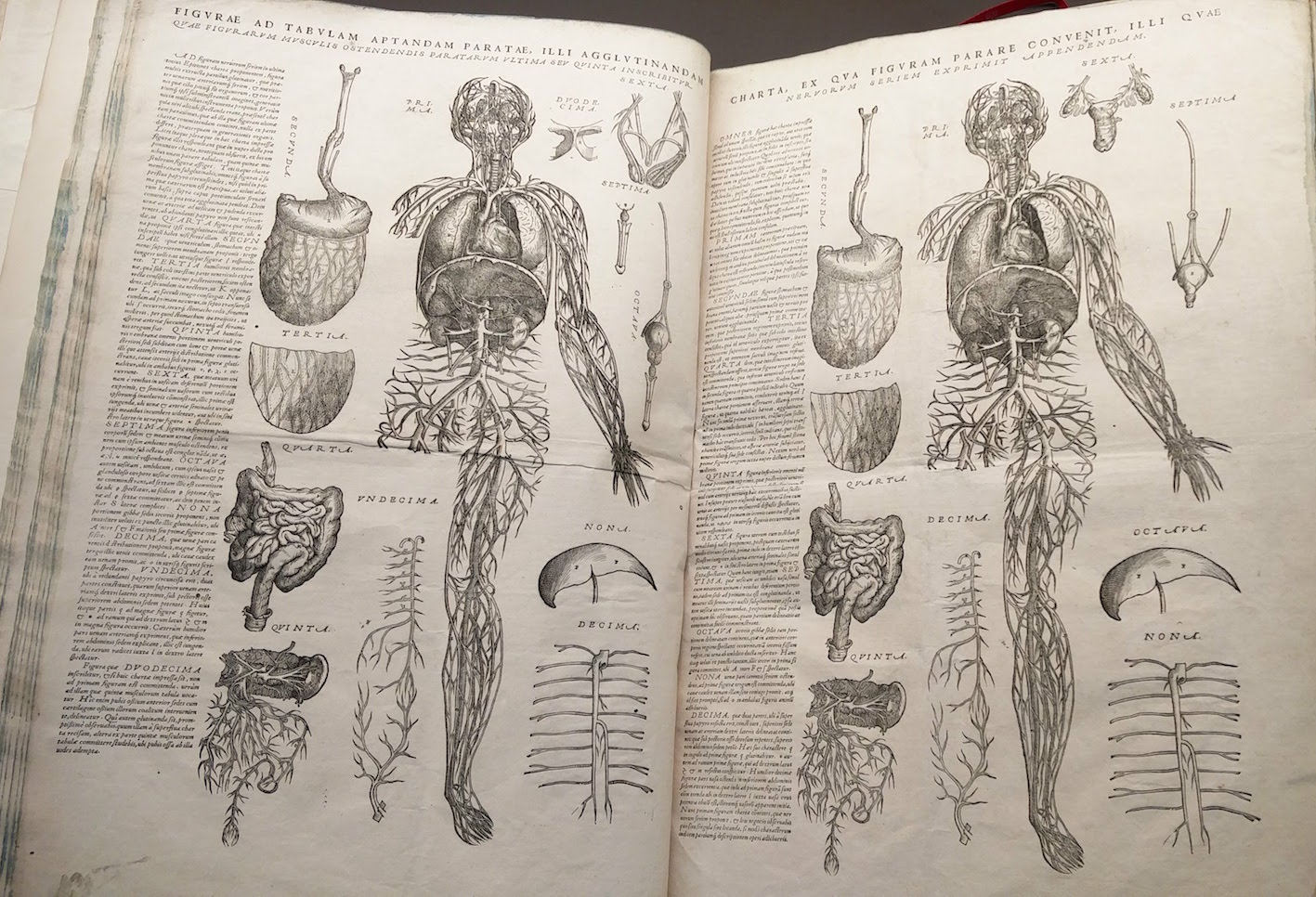 """Unbuilt manikin at the back of a copy of Andreas Vesalius."""