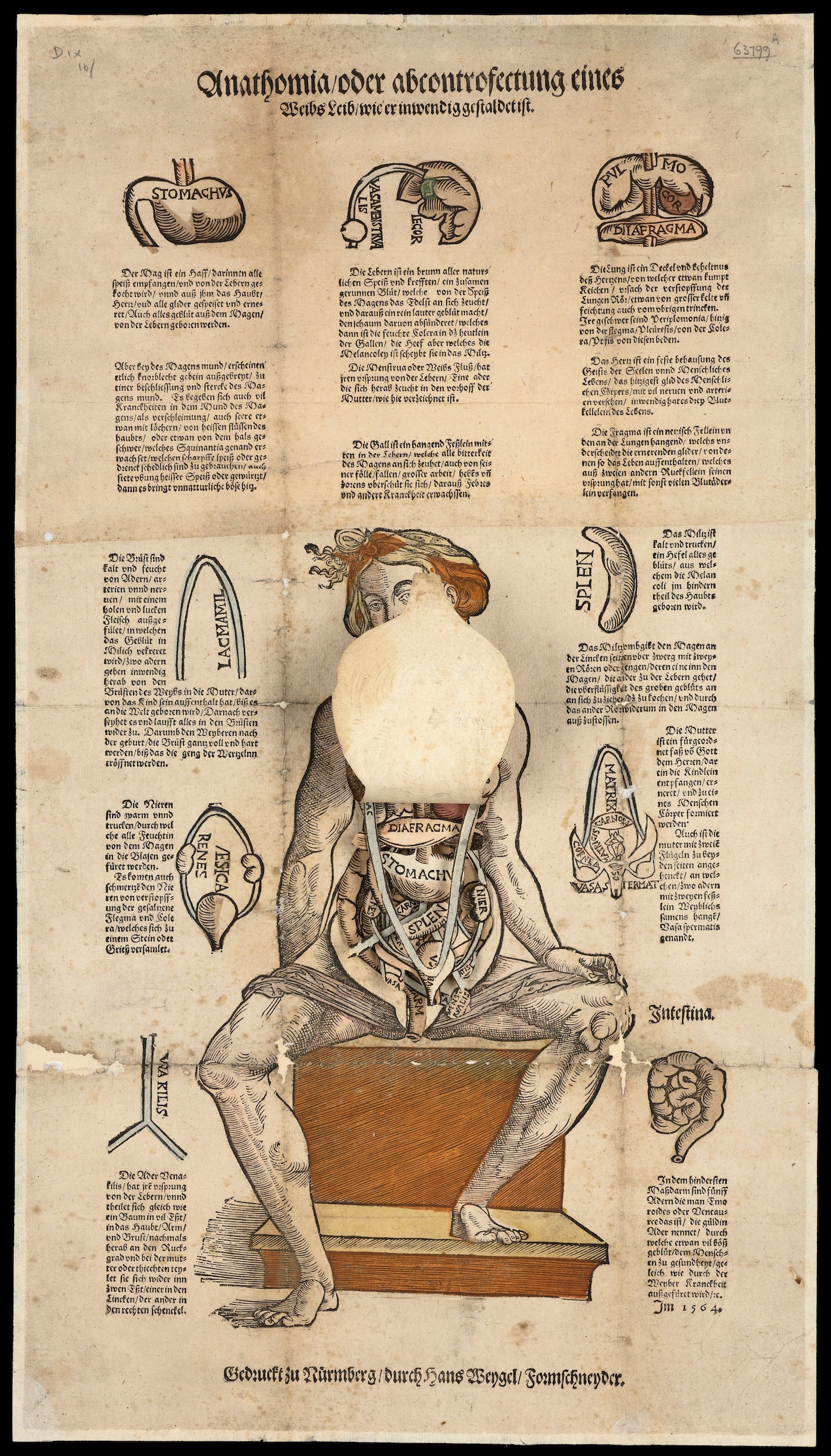 """Anatomical fugitive sheet."""