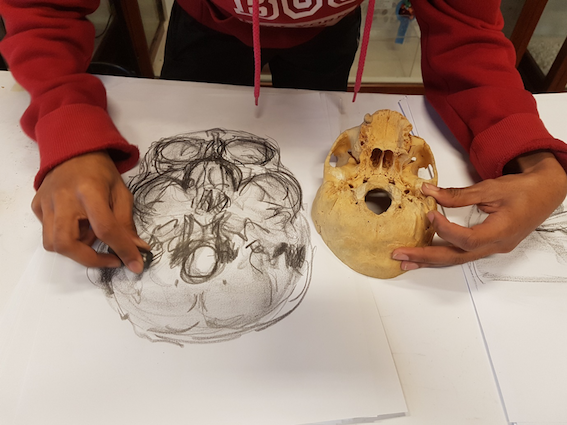 """""""Observation using touch and drawing – Anatomy Observation and Drawing, Special Studies Module (SSM) 2015. UCT Department of Human Biology."""""""
