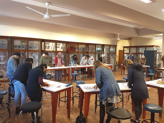 """""""Anatomy Observation and Drawing, Special Studies Module (SSM) 2017, UCT Department of Human Biology."""""""
