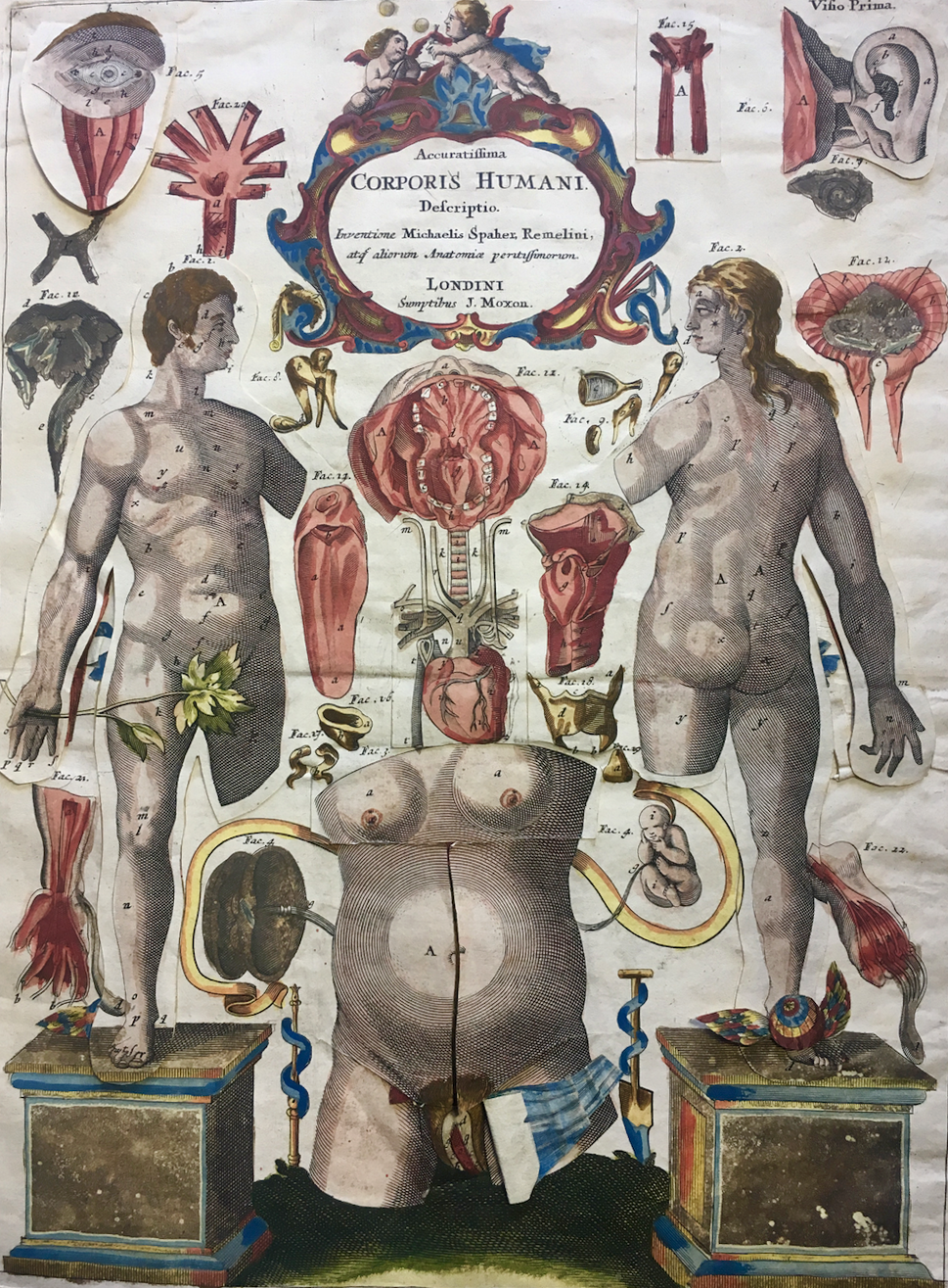 """Visio Prima of a hand-colored copy of the Catoptrum Microcosmicum (1698)"""